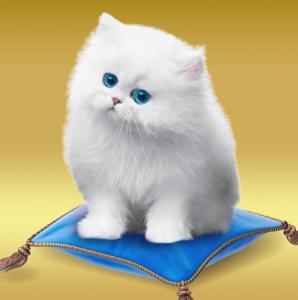 Win Royale Kitten