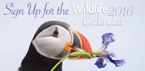 2015-calendar-cover